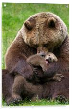 Brown Bear Mother cuddling Cub, Acrylic Print