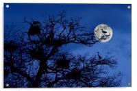 Heronry at Full Moon, Acrylic Print