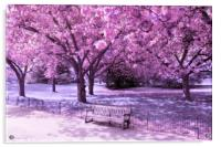 Under the blossom trees - Infrared, Acrylic Print