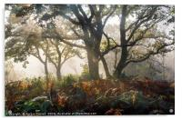 Mysterious Forest  , Acrylic Print