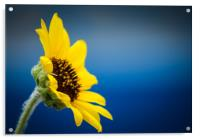 Sunflower, Acrylic Print