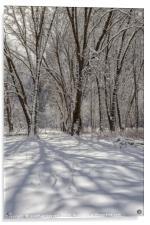 wintertime 2, Acrylic Print