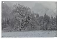 Yosemite Winter , Acrylic Print