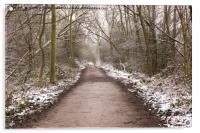 Winter Trail, Acrylic Print