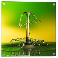 A double water drop collision, Acrylic Print
