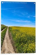 Summer field of yellow, blue sky, vapor trail, Acrylic Print