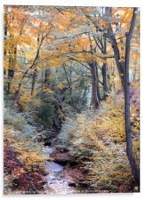 autumn woodland in beautiful seasonal colors with , Acrylic Print