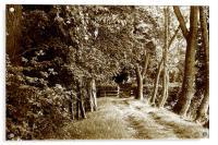 Tree lined track, Acrylic Print