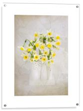 Spring Daffs, Acrylic Print