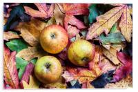 Apples on autumn leaves., Acrylic Print