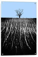 single tree in field, Acrylic Print