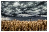 Wheat Field Thunder Storm, Acrylic Print