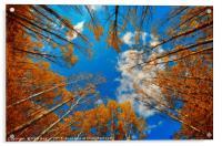 blue cloudy eye, Acrylic Print