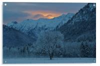 Winter's Dawn, Acrylic Print