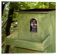 If Its Big Enough For An Owl..., Acrylic Print