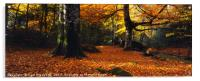 Devon Woods in Autumn, Acrylic Print