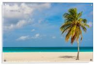 Palm tree alone on the white sand of the Eagle Bea, Acrylic Print