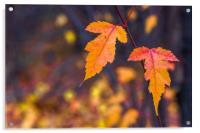 Autumn leaves on a blurry background, Acrylic Print