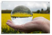 Round glass ball rapeseed field, Acrylic Print