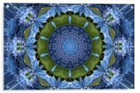 Hydrangea petals, Acrylic Print