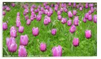 Pink Tulips , Acrylic Print