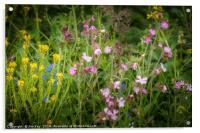 Wildflowers by the Roadside, Acrylic Print