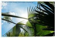 Lush tropical palm tree looking up perspective, Acrylic Print