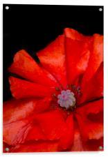 Red Poppy, Acrylic Print