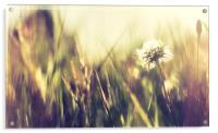 Abstract dandelion, Acrylic Print