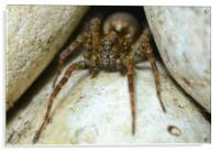 Lair of the wolf spider, Acrylic Print