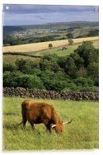 Castleton from Commondale, Acrylic Print
