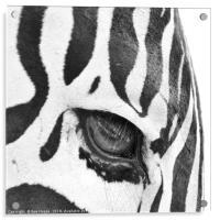 Zebra's Eye, Acrylic Print