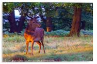 Red Deer on Richmond Common, Acrylic Print