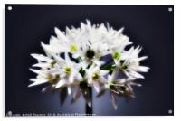 Wild Garlic flower No. 2, Acrylic Print