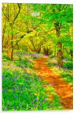 Bluebell Wood, Acrylic Print