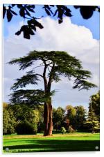 Lydiard Park, Swindon, Wiltshire, Acrylic Print