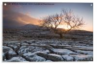 Tree at Twistleton Scar, Yorkshire Dales in winter, Acrylic Print