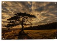 Sunset taken in The New Forest at Bolderwood, Acrylic Print