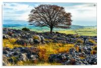 Ash tree and limestone pavement, Acrylic Print