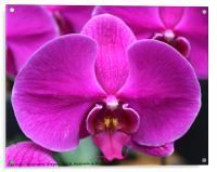 Purple Orchid, Acrylic Print