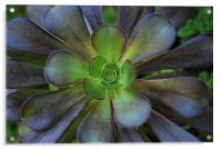 Flower Cactus, Acrylic Print