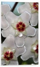 Flower Nectar , Acrylic Print