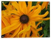 Summer Flower, Acrylic Print