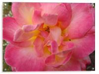 Pink flower , Acrylic Print