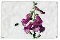 Bee and Foxglove , Acrylic Print