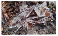 Ice flower , Acrylic Print