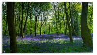 Chalet Wood Wanstead Park Bluebells, Acrylic Print