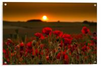 Sunset over poppies in Sussex, Acrylic Print