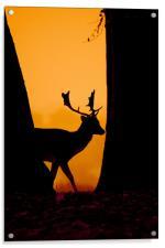 Deer Silouette, Acrylic Print