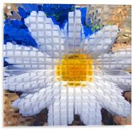 Sunflower , Acrylic Print